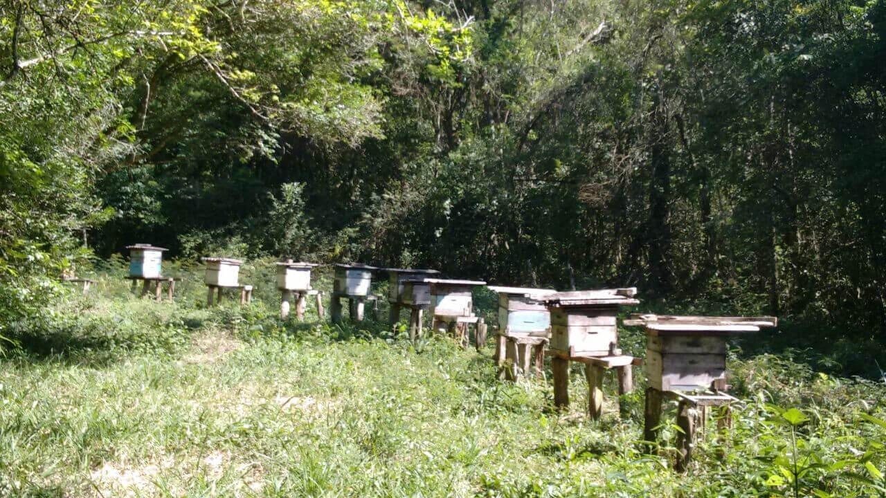 Colônia de abelhas
